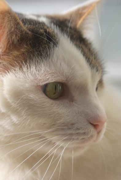 My beautiful cat George