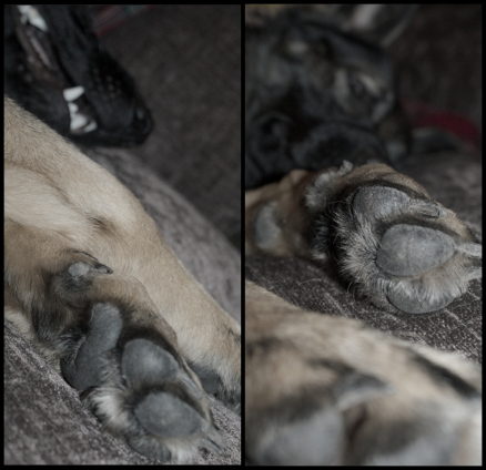 Unis' paws